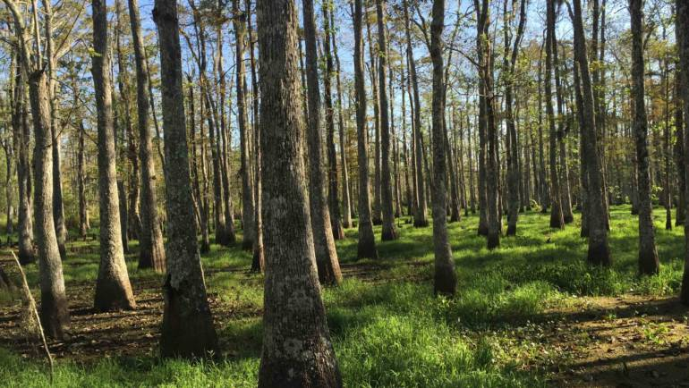 PETERS Forest Resources – The leader in managing tracts of forested property.