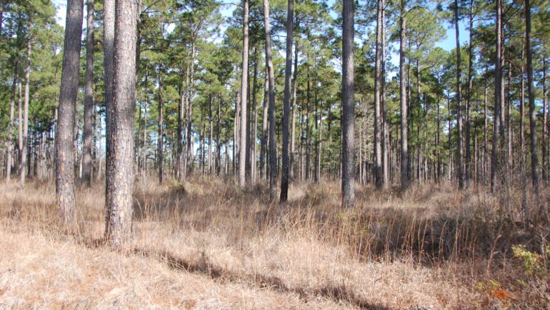 PETERS' team helps landowners appraise and evaluate their natural resources.